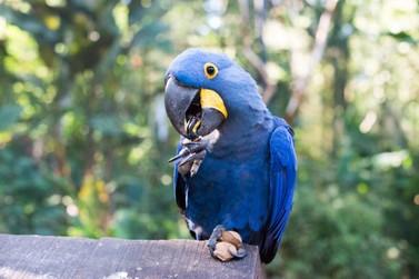 Parque das Aves proporciona cuidados especiais aos animais durante o inverno