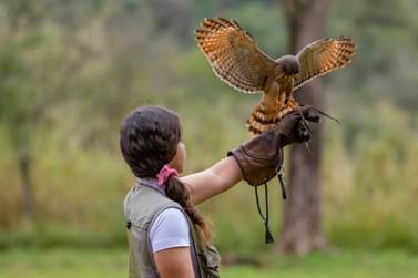 Centro de Falcoaria amplia número de visitas diárias e permite contato com aves