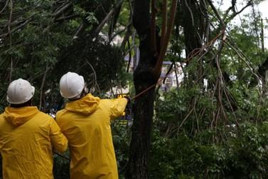Mais de 100 árvores caíram nas vias públicas de Foz do Iguaçu durante o temporal