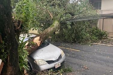 Temporal causa estragos, quedas de árvores e falta de luz em Foz do Iguaçu