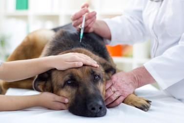 Guaratuba terá campanha de vacinação contra a raiva em cachorros