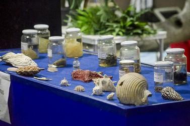 Guaratuba tem museu que destaca a cultura caiçara e a preservação ambiental