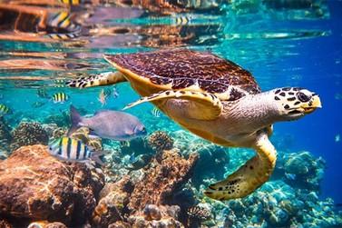 Relatório aponta que mais de um milhão de espécies estão em extinção