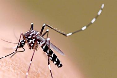 Número de casos positivos de dengue em Guaxupé sobe para 29