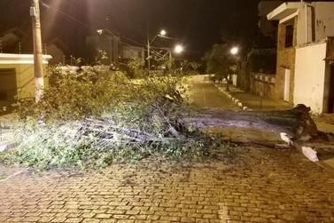 Queda de árvore interdita rua no centro da cidade