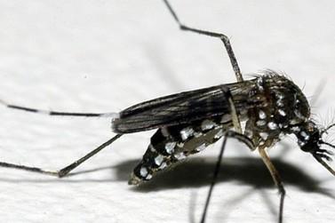 Cuidados para evitar dengue, chikungnya e zika devem ser reforçados nas férias