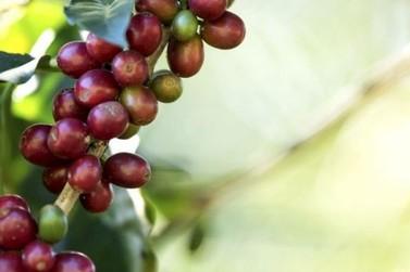 Demanda por cafés diferenciados cresce e deve favorecer exportações em 2020