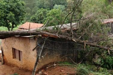 Tempestade: casas são atingidas por árvores no Jardim Planalto e Alto da Colina