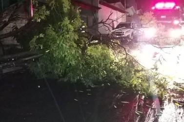 Tempestade derruba árvores e causa transtornos em Guaxupé