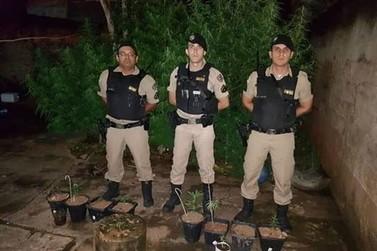 Policia Militar encontra plantação de maconha em Guaxupé