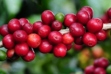 Governo anuncia Concurso de Qualidade de Café