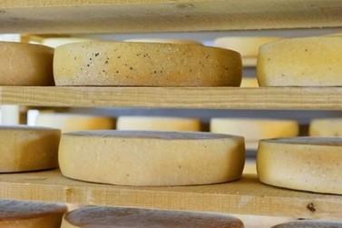 Produção de queijo artesanal ganha mais um incentivo