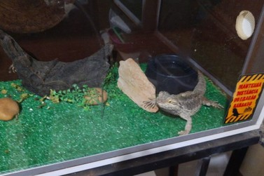 Polícia Ambiental apreende 19 serpentes e lagarto exótico em Mococa