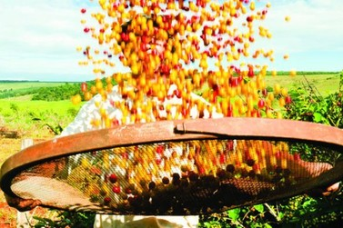 TJMG garante a meeiros o direito de acompanhar colheita