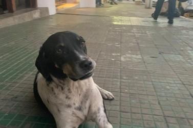 Ministério Público recomenda recolhimento de animais de rua em Guaxupé