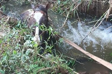 Bombeiros de Guaxupé salvam cavalo atolado na zona rural