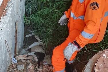 Bombeiros resgatam cachorra vítima de maus tratos em Guaxupé