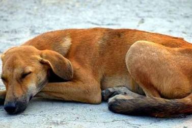 Mês de abril marca a luta contra o abandono de animais