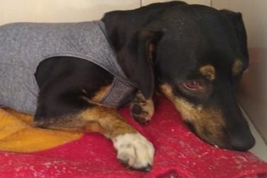 Prefeitura de Juruaia realiza castração de animais