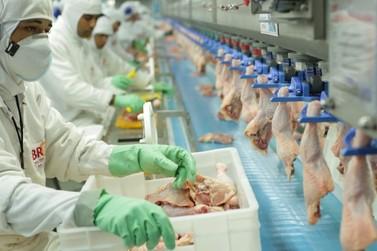 Exportações de carne de frango mantém alta de 5,1% em 2020