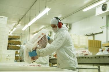 Exportações brasileiras de carne suína crescem 50,4% em junho