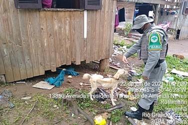 Mulher é detida por maus-tratos a animais no bairro Rothmann em Igrejinha