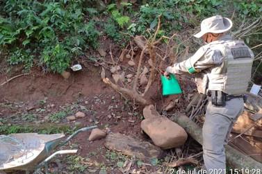 PATRAM faz averiguação após denúncia de corte de vegetação nativa em Igrejinha