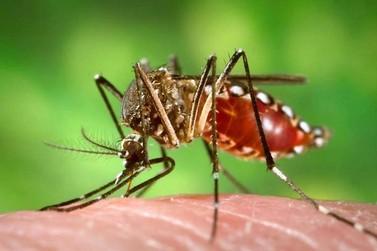 Paraná tem 15,3 mil casos de dengue confirmados