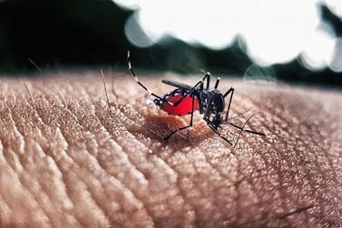 Paraná registra 22,9 mil casos confirmados de dengue em um ano