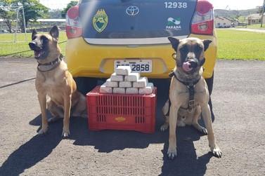 Quatro suspeitos foram apreendidos por narcotráfico em Jacarezinho