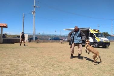 Operações com Cães realizou apresentação para alunos na cidade de Guapirama