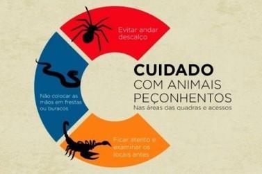 Saiba como evitar acidentes com animais venenosos e peçonhentos