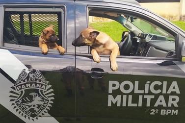 2º BPM recebe dois novos cães para integrar Canil