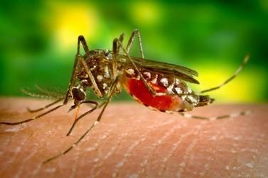 Estado soma 102,2 mil casos de dengue e 78 óbitos