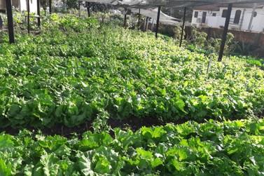 Asilo São Vicente de Paulo tem verduras orgânicas prontas pra consumo