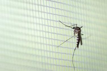 Paraná registra 157 mortes por dengue e mais de 217 mil casos confirmados