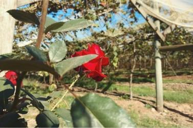 Louveira concorre a prêmio por apoio a agricultura