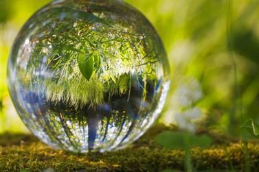 Gestão Ambiental celebra o Dia Mundial do Meio Ambiente com programação especial