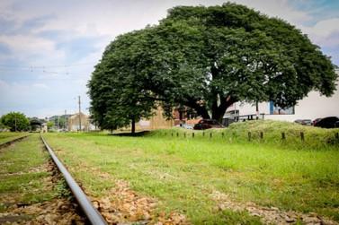 A prefeitura convida os munícipes para participar da arborização de Louveira