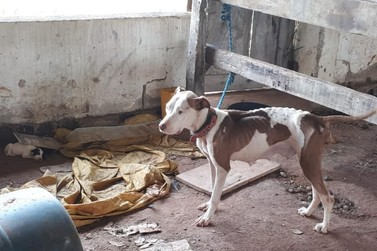 Animais sofrendo maus tratos em Louveira