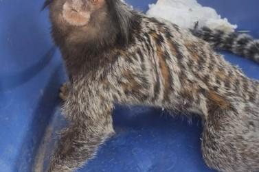 GAPA realiza cinco resgates de animais silvestres nesta semana