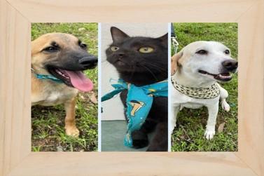 Prefeitura de Itupeva incentiva adoção responsável de animais de domésticos