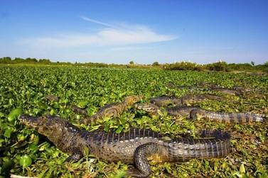 Chineses reconhecem potencial turístico do Pantanal Matogrossense