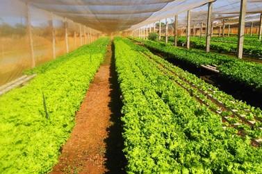 Parceria entre prefeitura e FS Bioenergia beneficia agricultura familiar