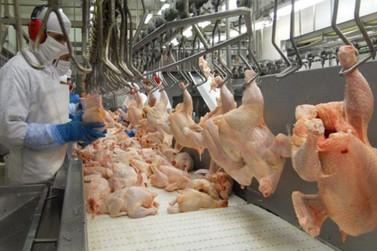 Supermercados garantem manutenção dos preços do frango em Lucas do Rio Verde