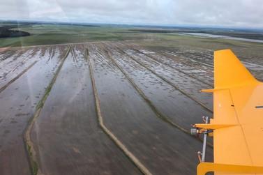 Excesso de chuvas coloca em risco safra do milho no Vale do Teles Pires