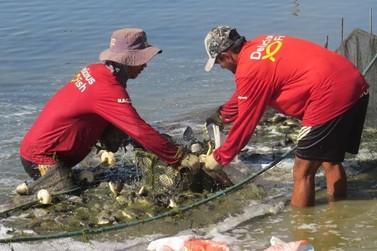 Delicious Fish estuda dobrar capacidade produtiva de pescado confinado