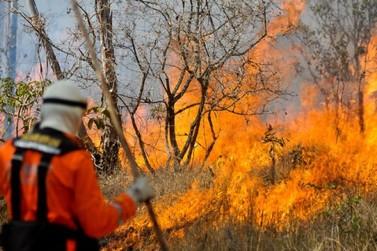 Mais de 5 mil focos de queimadas foram registrados em Mato Grosso