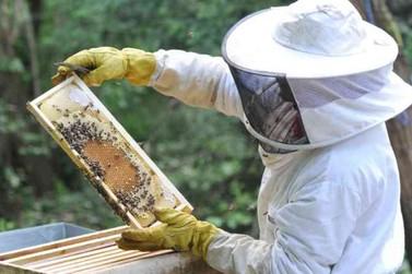 """""""Se usados de maneira correta, defensivos não matam abelhas"""", diz cientista"""