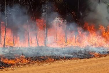 Área de 100 hectares é destruída por incêndio, em Lucas do Rio Verde